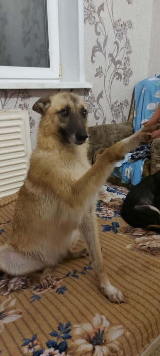 В сундуке на трассе собака спасала от холода больного щенка