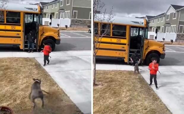 Собака поблагодарила водителя автобуса за то, что он довез ее хозяина
