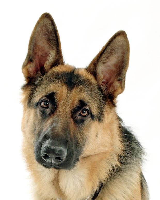 Альтон рассказ, случай, собаки