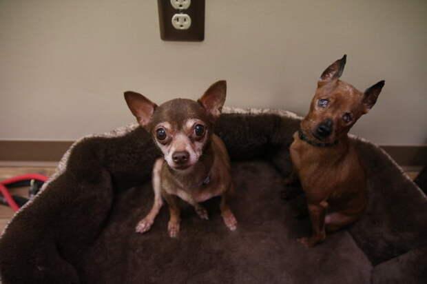 История о двух брошенных собаках, которые не могут жить друг без друга