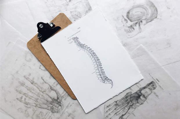 Позвоночник и психика: здоровая спина влияет на крепкие нервы