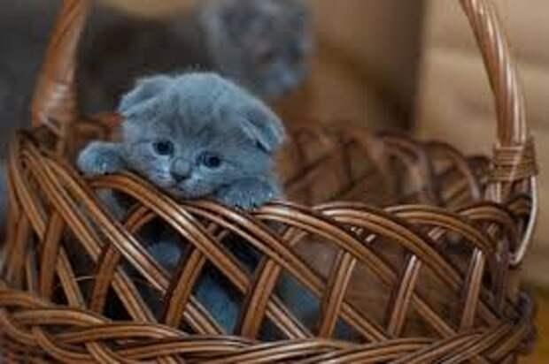 Похитители кошек