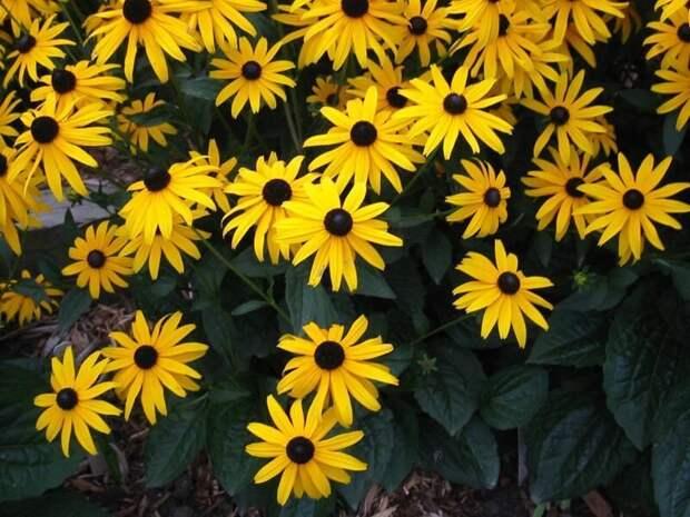 ТОП-10 самых популярных многолетних растений