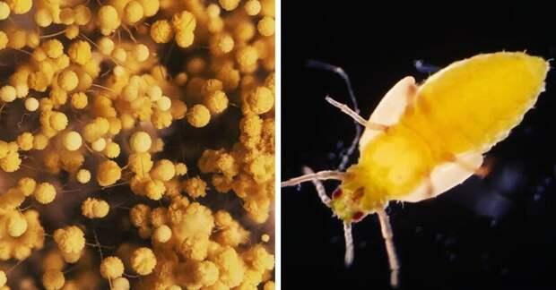 Датчанин через микроскоп показывает всех тех, кто живёт рядом с нами, даже когда мы думаем, что одни в мире, интересно, под микроскопом, познавательно, фото