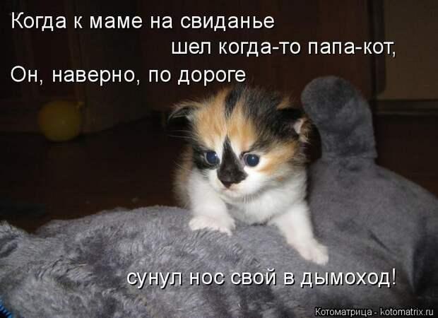 Котоматрица: Когда к маме на свиданье  шел когда-то папа-кот, Он, наверно, по дороге  сунул нос свой в дымоход!