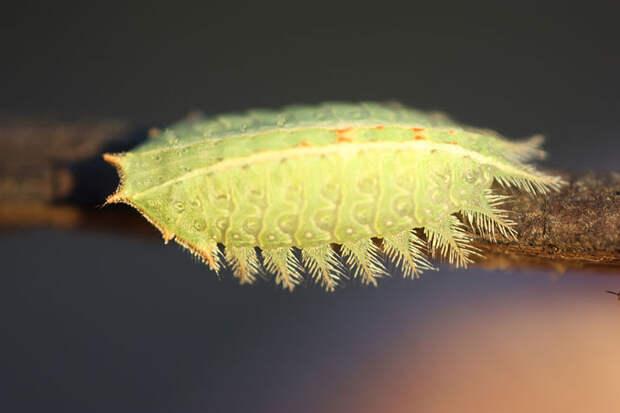 Гусеницы и бабочки. До и после