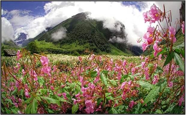 Долина цветов в Гималаях