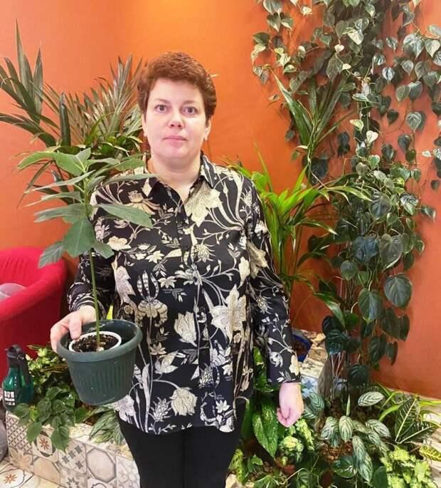 Людмила Михайлова с выросшим манго/Из личного архива