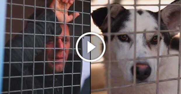 Известный француз запер себя в клетке на 87 часов, что бы помочь бездомным животным