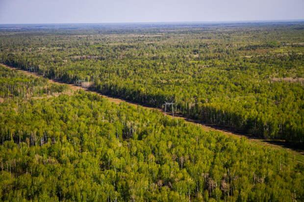 Лесной фонд Тверской области станет богаче на 2,1 тысячи гектаров