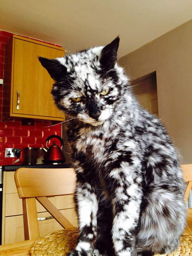 Мраморная красота животные, забавно, коты, кошки, неожиданно, окрас, окрас кошек, фото