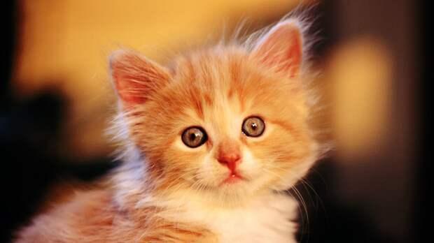 Няшные-котяшные