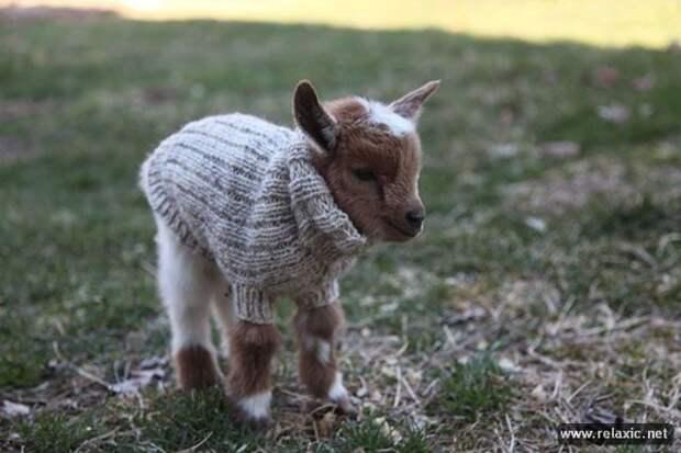 Сказочные козлята
