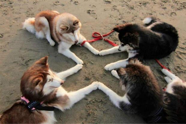 Игры с друзьями по племени. | Фото: Фишки.нет.