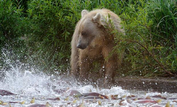 ПУТЕШЕСТВИЯ. Медвежий край