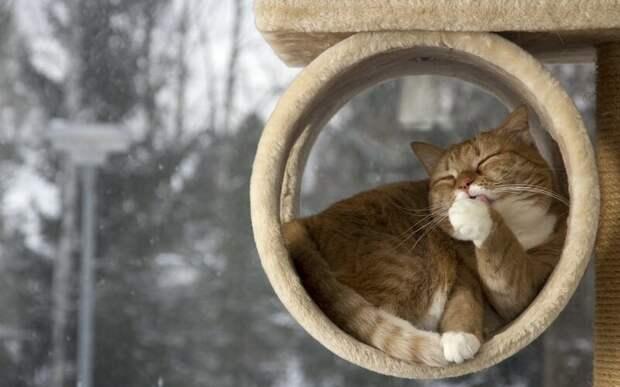 15. Кошка всегда чистая и приятно пахнет. жены, интересное, кошки, юмор