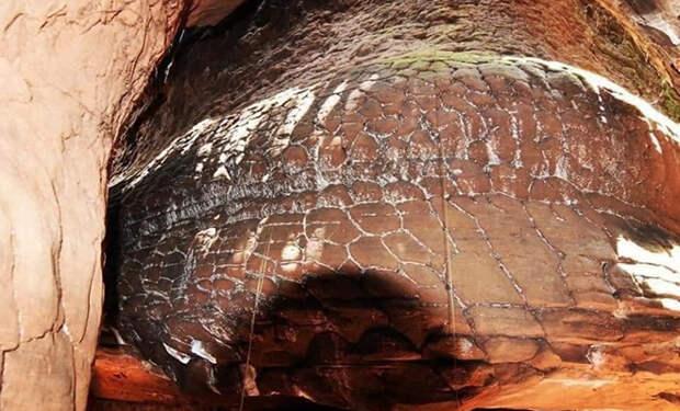 В джунглях нашли необычную пещеру, и некоторые считают ее гигантской окаменевшей змеей. Видео