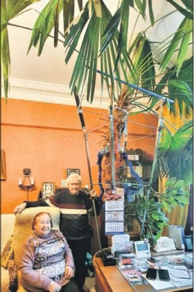 Пенсионеры из Алексеевского более 35 лет ухаживают за пальмой