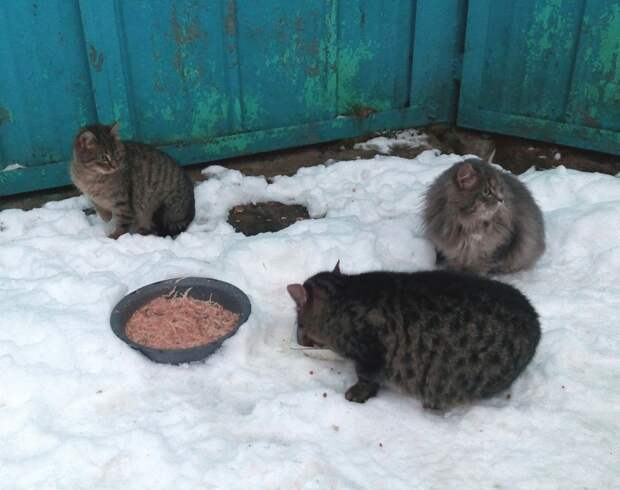 Летние брошенные котята и совсем никому не нужные... Помогите хотя бы временно