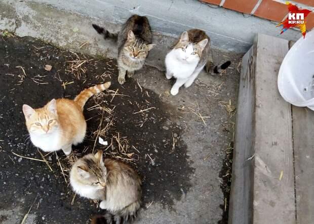 Кошачье семейство круглыми сутками не отходит от дома, ожидая своих хозяев Фото: Анна Фролова