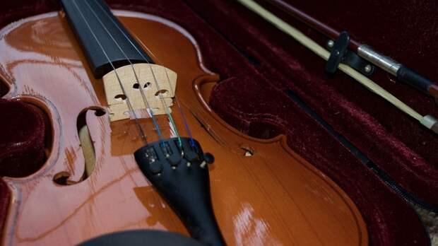 Петербургская школьница лишилась скрипки в овощном отделе гипермаркета