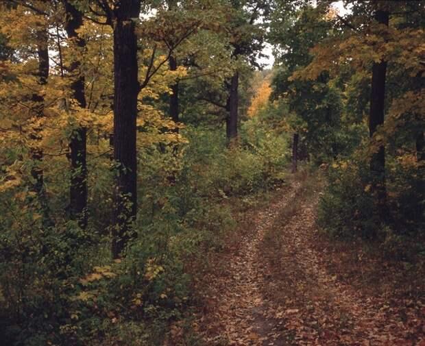 За грибами: старушка-Робинзон не сдавалась в лесной чаще 18 дней, пока родня вела ее поиски