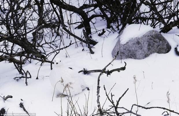13 раз, когда кто-то из животных замаскировался круче, чем ниндзя