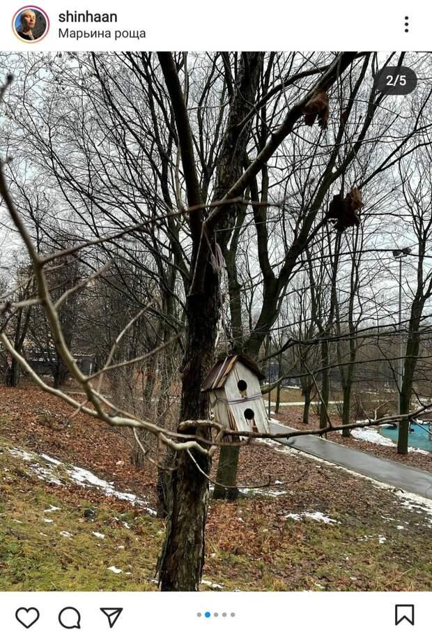 Фото дня: в Марьиной роще обнаружили ветхое птичье жилье
