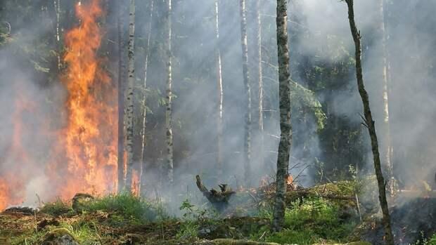 Спасатели тушат пожар площадью более 30 тыс. га в Иркутской области