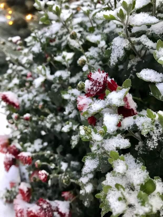 В Симферополе выпал снег. Фото