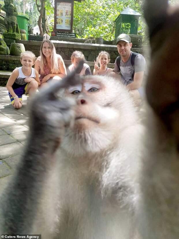 Фиг вам, а не селфи! Обезьяна на Бали сама сделала эпичный кадр с туристами