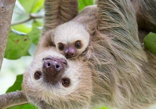 12 фотографий самых Милых Животных - сможешь сдержать улыбку?