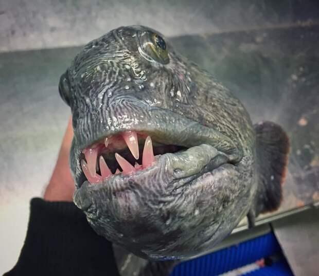 Динозавры не вымерли, они просто замаскировались) монстры, море, рыбалка, рыбы, улов