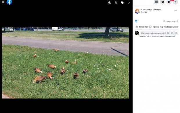 Фото дня: Алтуфьевские огари «на выпасе»
