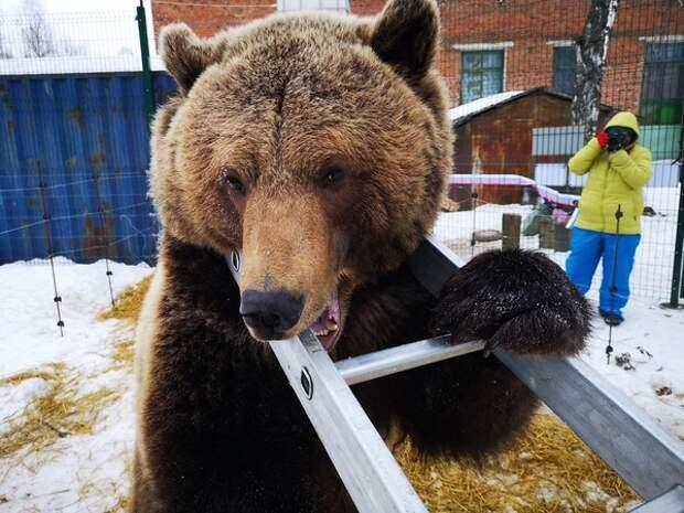 Медведь напал на человека в Большом московском цирке на Вернадского
