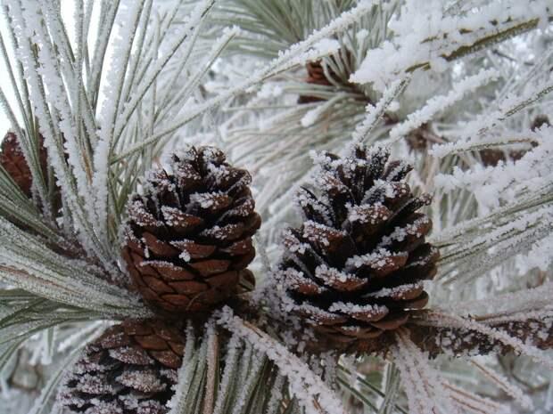 20-градусные морозы придут в Удмуртию во вторник