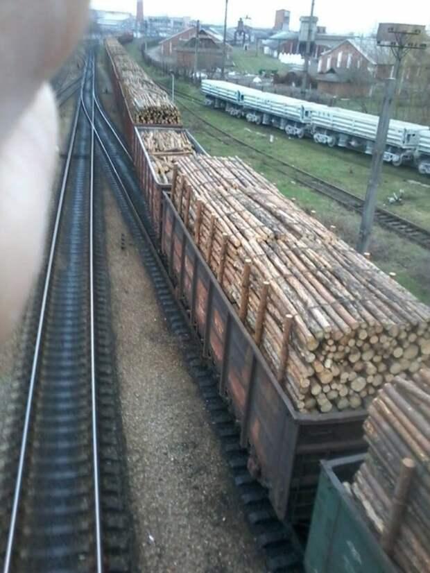 Что бы вы сделали правителю, подписавшему разрешение на вывоз леса-кругляка из Украины?