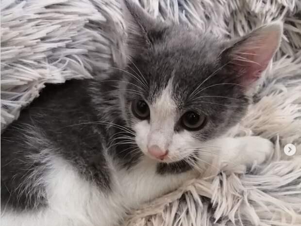 На Пятницком шоссе котенок бросился наутек от ветеринаров