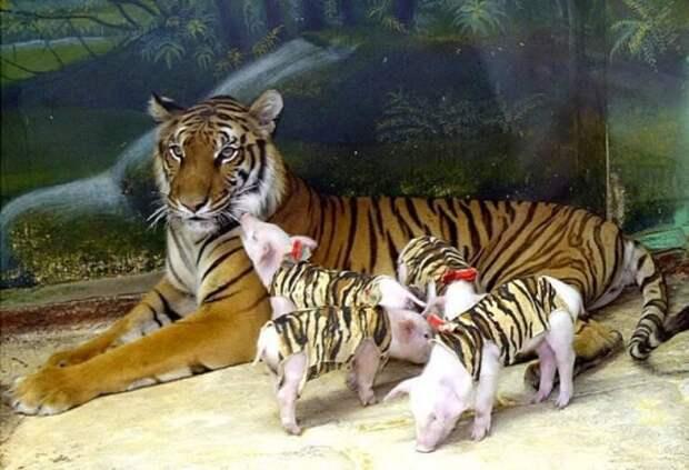 Самые забавные кадры с животными