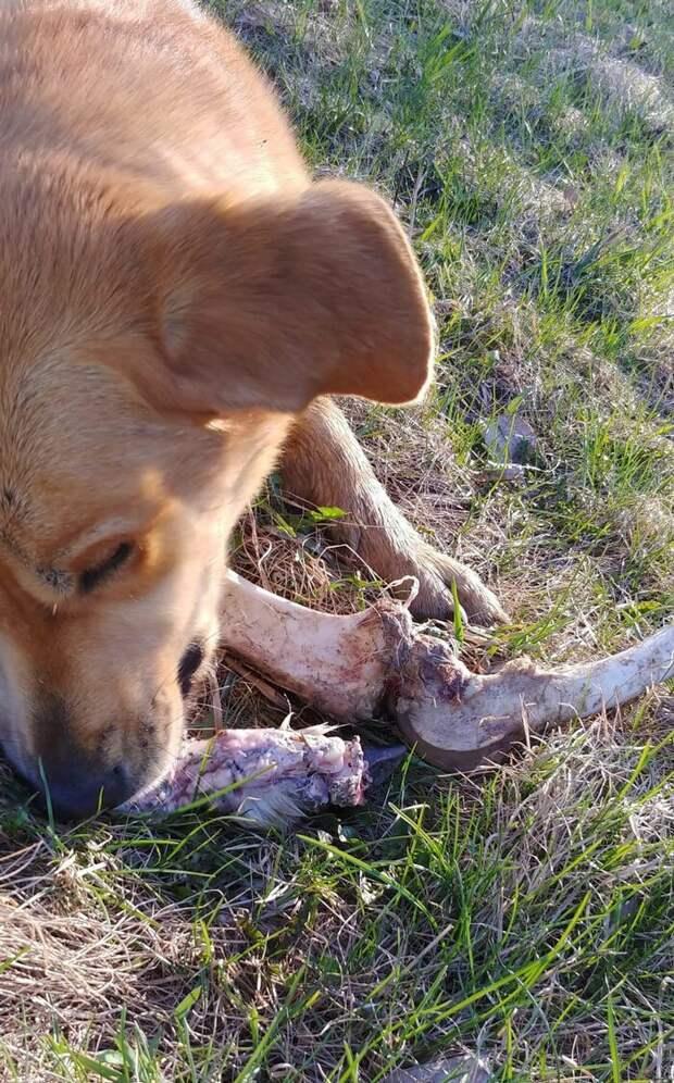 Бриклберри наслаждается взяткой животные, история, канада, медведь, мусор, подкуп, собака