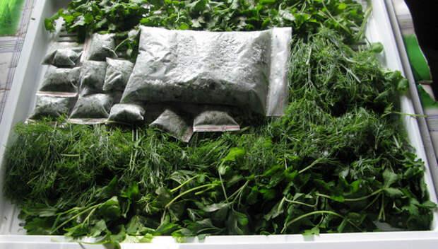 Зелень: секреты длительного хранения