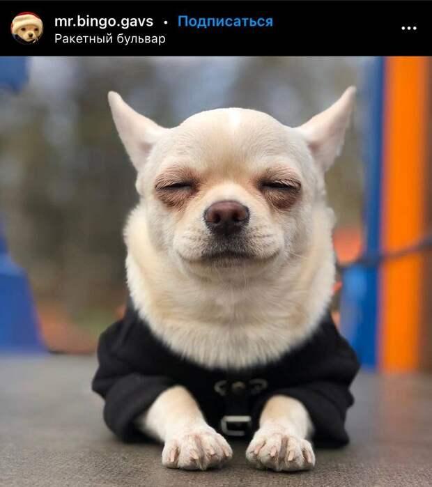 Фото дня: собака прилегла отдохнуть на Ракетном бульваре