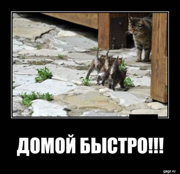 demotivator_prikol_gagz_ru_14458568