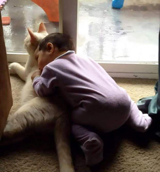 Родители сразу начали снимать моменты их трогательной дружбы  девочка, дружба, кот