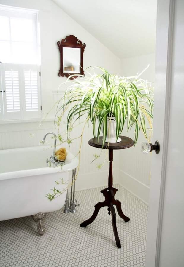 Украшение ванной комнатными растениями