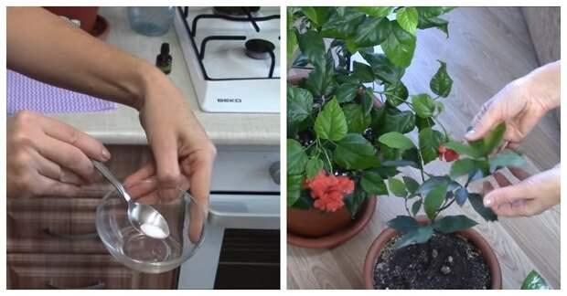 Супер подкормка для всех комнатных растений. Результат гарантирован