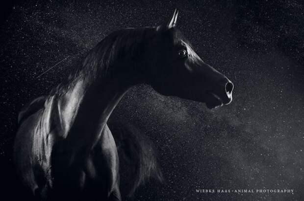 Арабская ночь животные, искусство, лошади, фотография