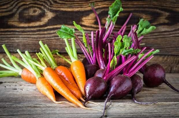 Что посеем? Интересные факты о свекле и моркови