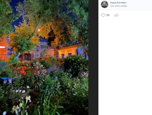 Фото дня: райский сад на Новопетровской