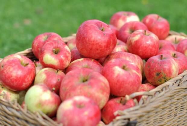 В Польше с горечью отреагировали на яблочный успех России